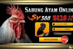 Situs Judi Sabung Ayam Online · Agen S128 · Daftar SV388